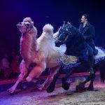 WWC-2017-18-17-Maycol-Errani-Photo-Circus-Knie